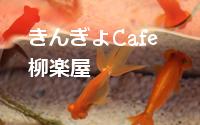 きんぎょCafe 柳楽屋